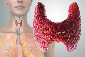 picture of human thyroid